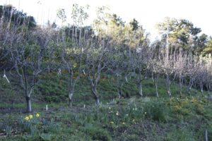 Winter Pruning 101 ~ Stone Tree Farm